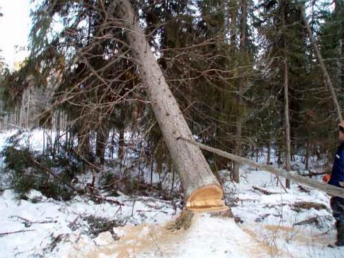 Заготовка брёвен в зимний период
