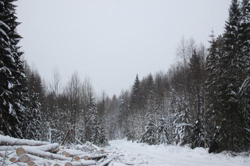 Заготовка леса в зимнюю пору