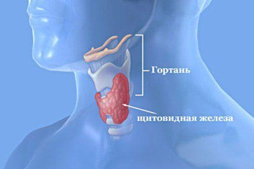 Как баня влияет на щитовидную железу