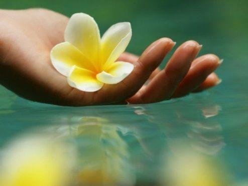 Цветы и целебные травы для бани